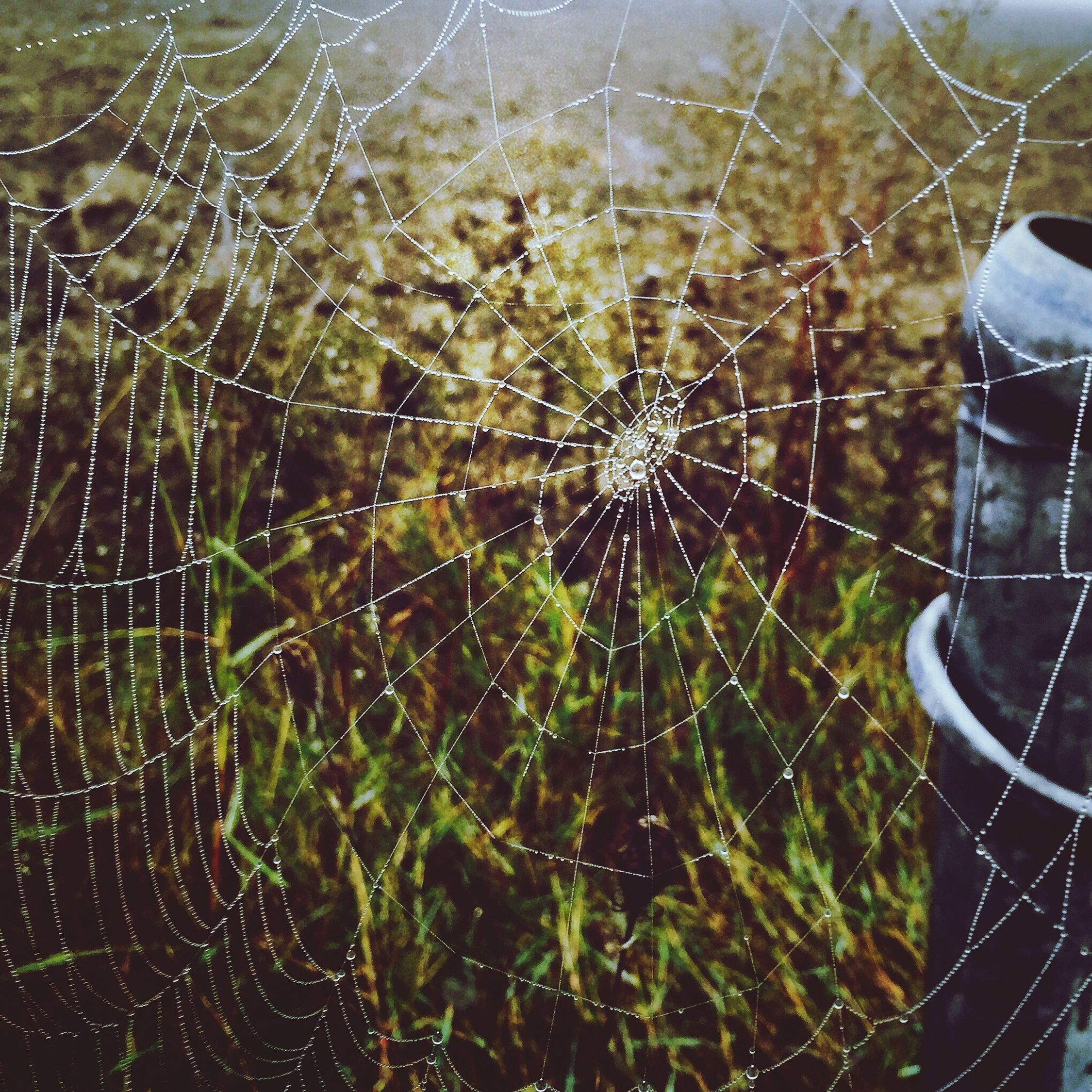 The EyeEm Facebook Cover Challenge First Eyeem Photo Spider #tela Natura Animals Ragno
