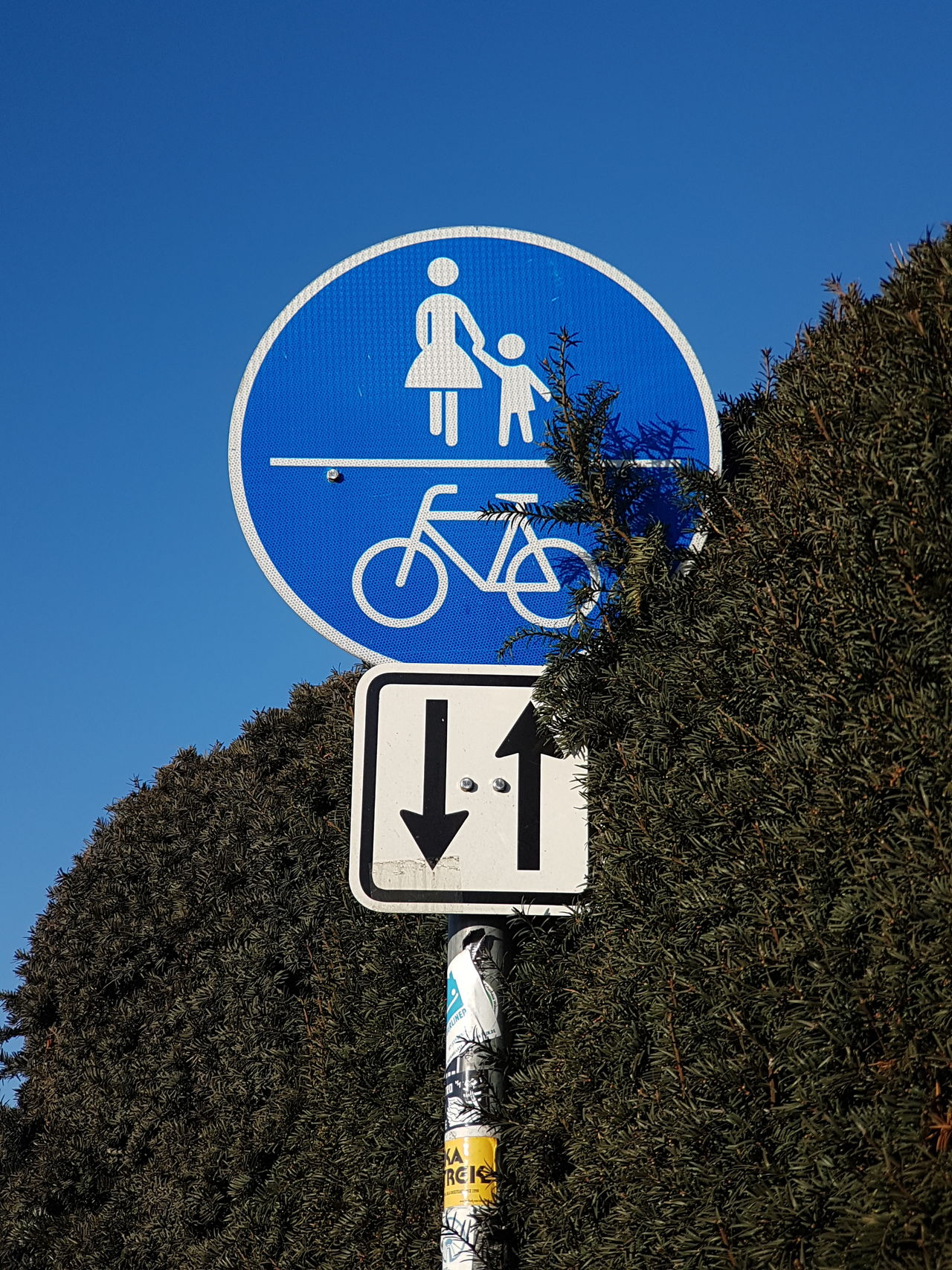 Logo Road Sign Together Walking Walking Around Signs_collection Signs Bycicle Ride Street Sign Street Signs Attention Arrow Sign Straight Lines Walking Around The City  Walking Together Cover Background Green Wall Road Signs