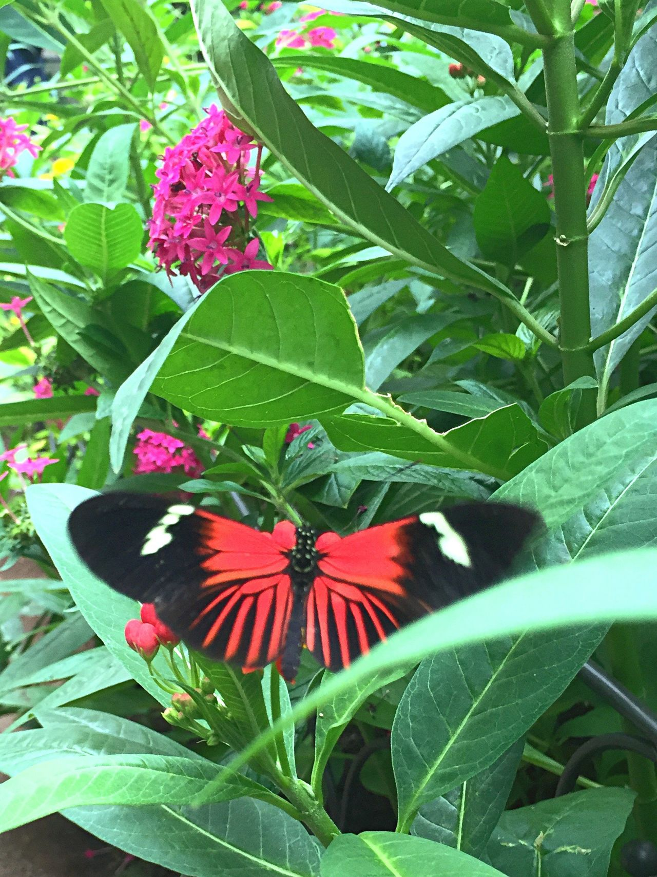 Butterfly Taking Pictures Thebutterflyplace Nature Flowers Plants