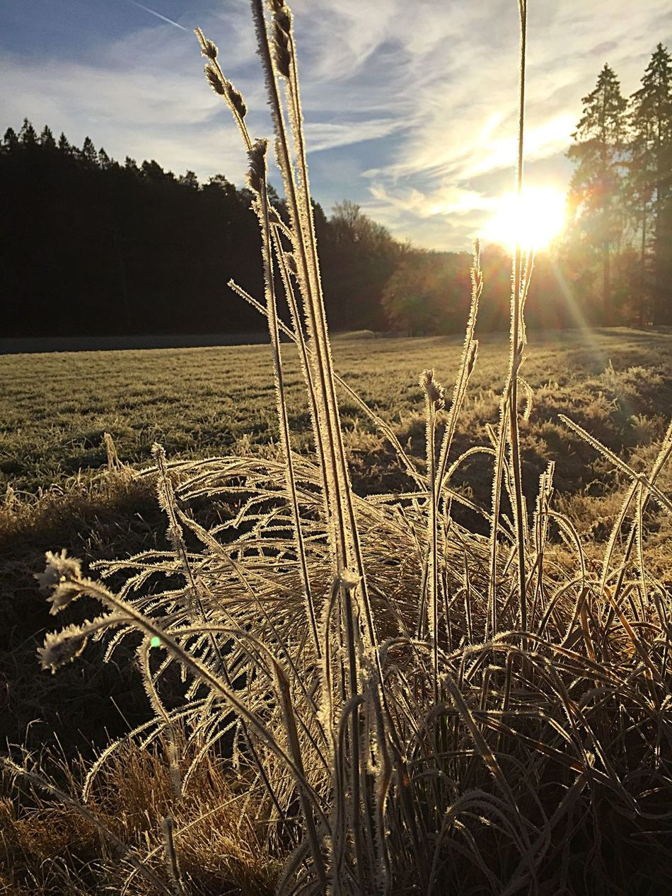 Morning Light Morning Nature Beauty In Nature Field Outdoors Landscape IPhoneography Outside Photography Iphonephotography Sweden Outside Taking Photos Jonsered Nature Walking The Dog