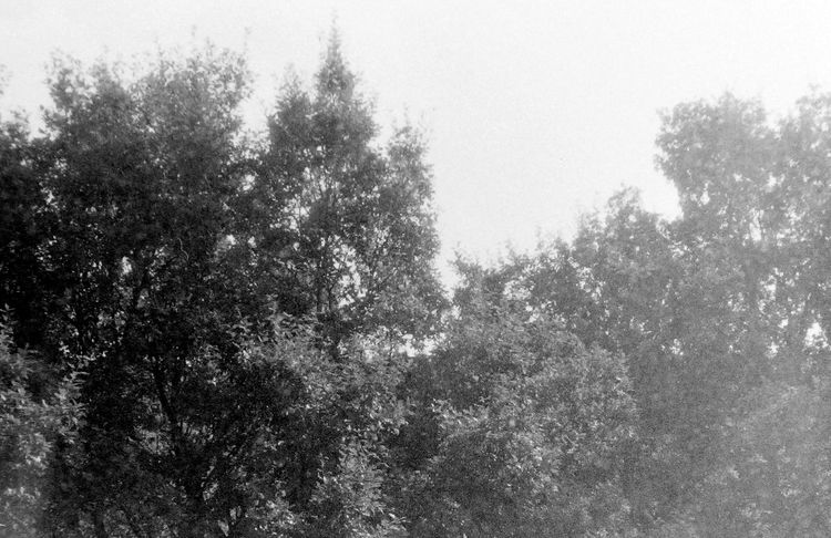 Amazing Blackandwhite Canon Canon AE-1 Classic Color Day Film Film Photography Filming Freedom Germany Jazz Kodak Landscape Me Mission Mystery Nature People Tree Ugly Me