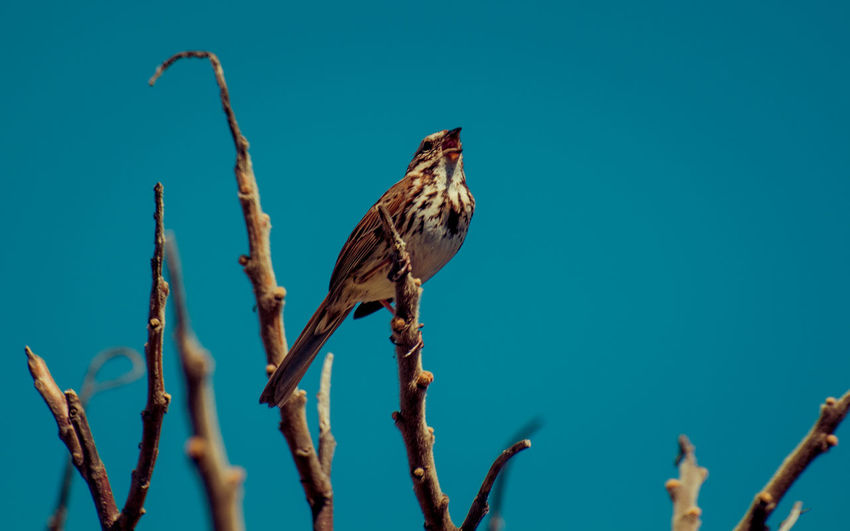 Animal Themes Animal Wildlife Animals In The Wild Beauty In Nature Bird Blue Sky Branch Clear Sky Close-up Day Dead Plant Dried Plant Growth Low Angle View Nature No People One Animal Outdoors Perching Plant Tommy Thompson Park