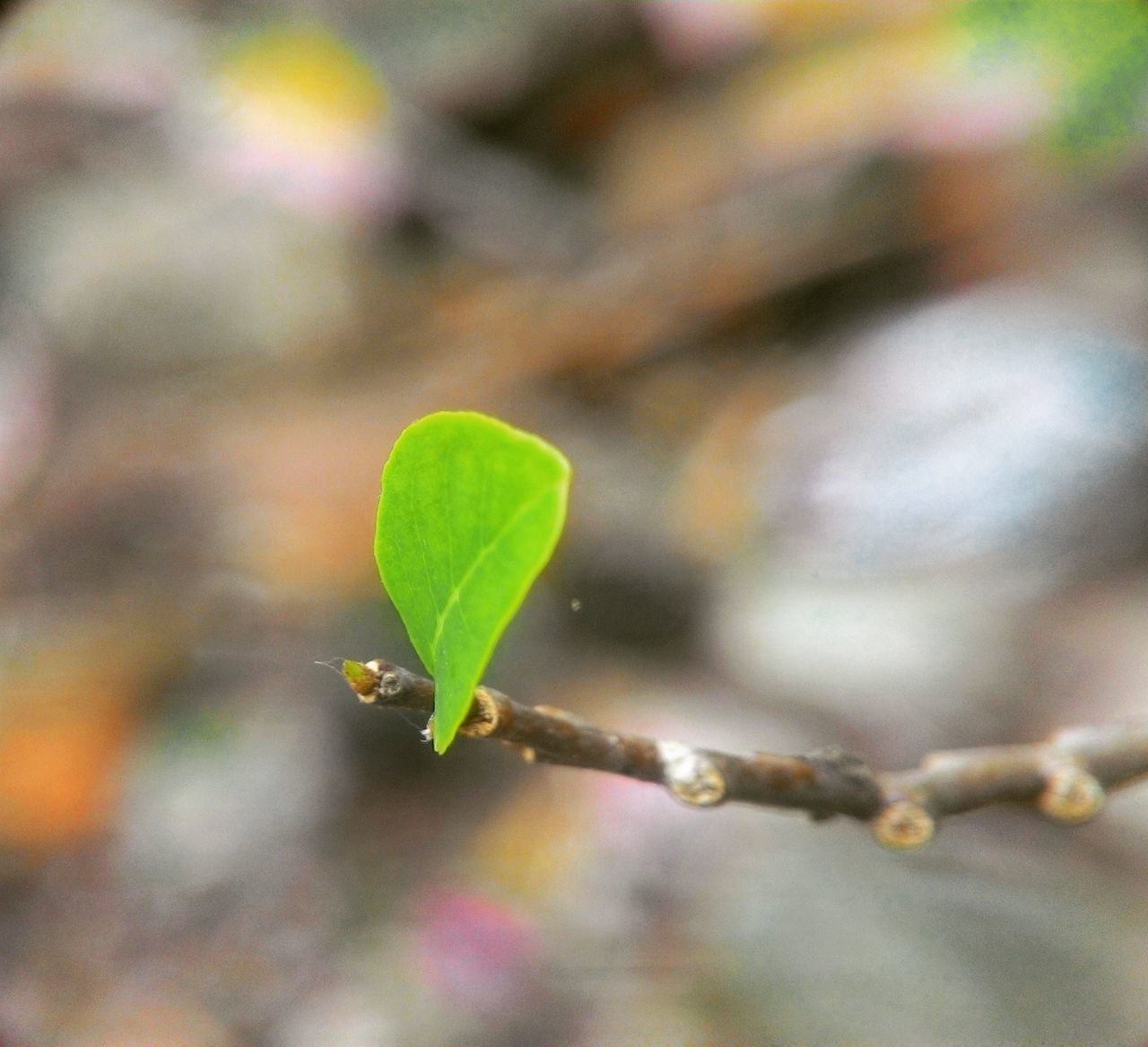 Leaf Leaf Plant Growth Nature Green Color No People Close-up Outdoors Beginnings Day Beauty In Nature Eyeemphotography Beauty In Nature Nature EyeEmBestPics Plant Green Color Macrophotography Grass Macro Beauty Macro_secrets Macro_captures Photography Macroworld Macro Clique