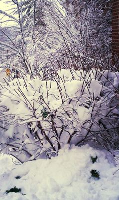 snow in Saint Charles by Jennifer