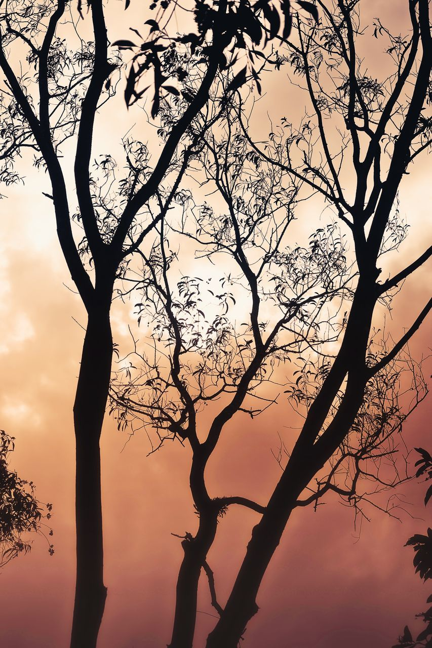 tree, branch, silhouette, tranquility, nature, beauty in nature, bare tree, tree trunk, sunset, tranquil scene, no people, sky, outdoors, scenics, dead tree, day