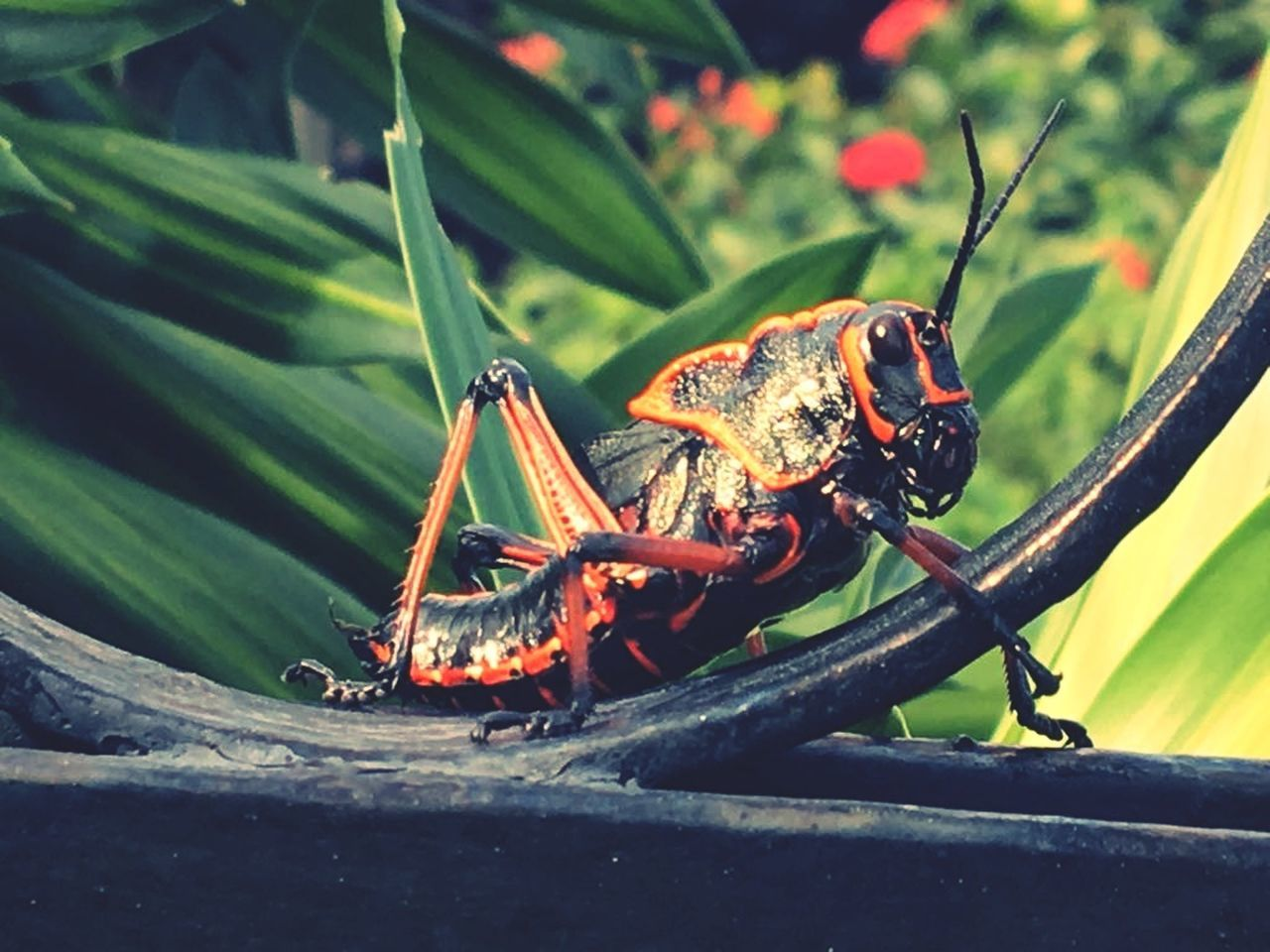 Summer Animal Wildlife Nature Close-up Animals In The Wild Living Organism Tree Day Animal Crickets Jungle Green Color