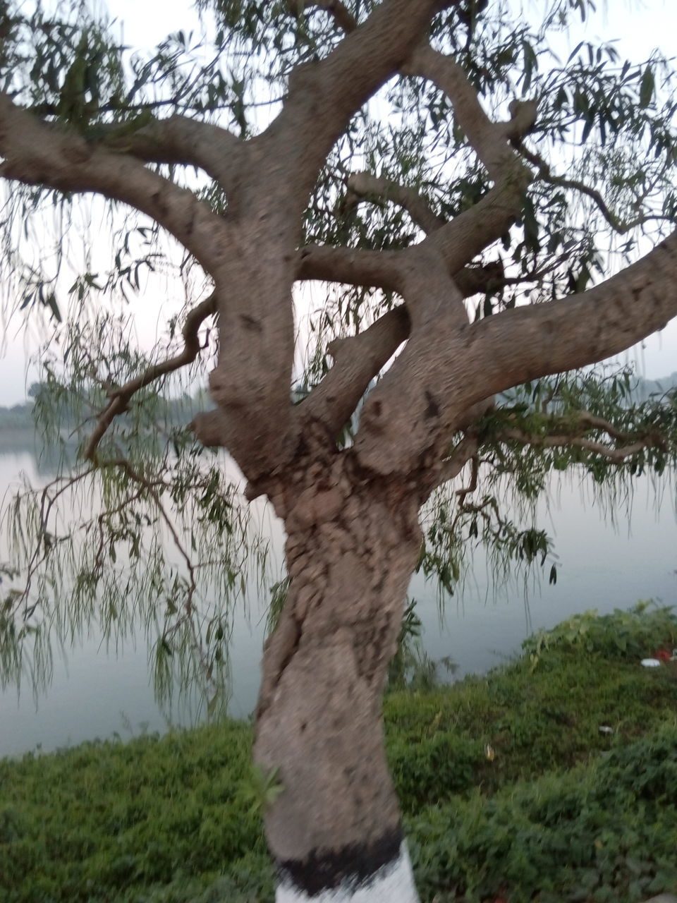 tree, day, tree trunk, nature, outdoors, growth, grass, scenics, beauty in nature, no people, sky