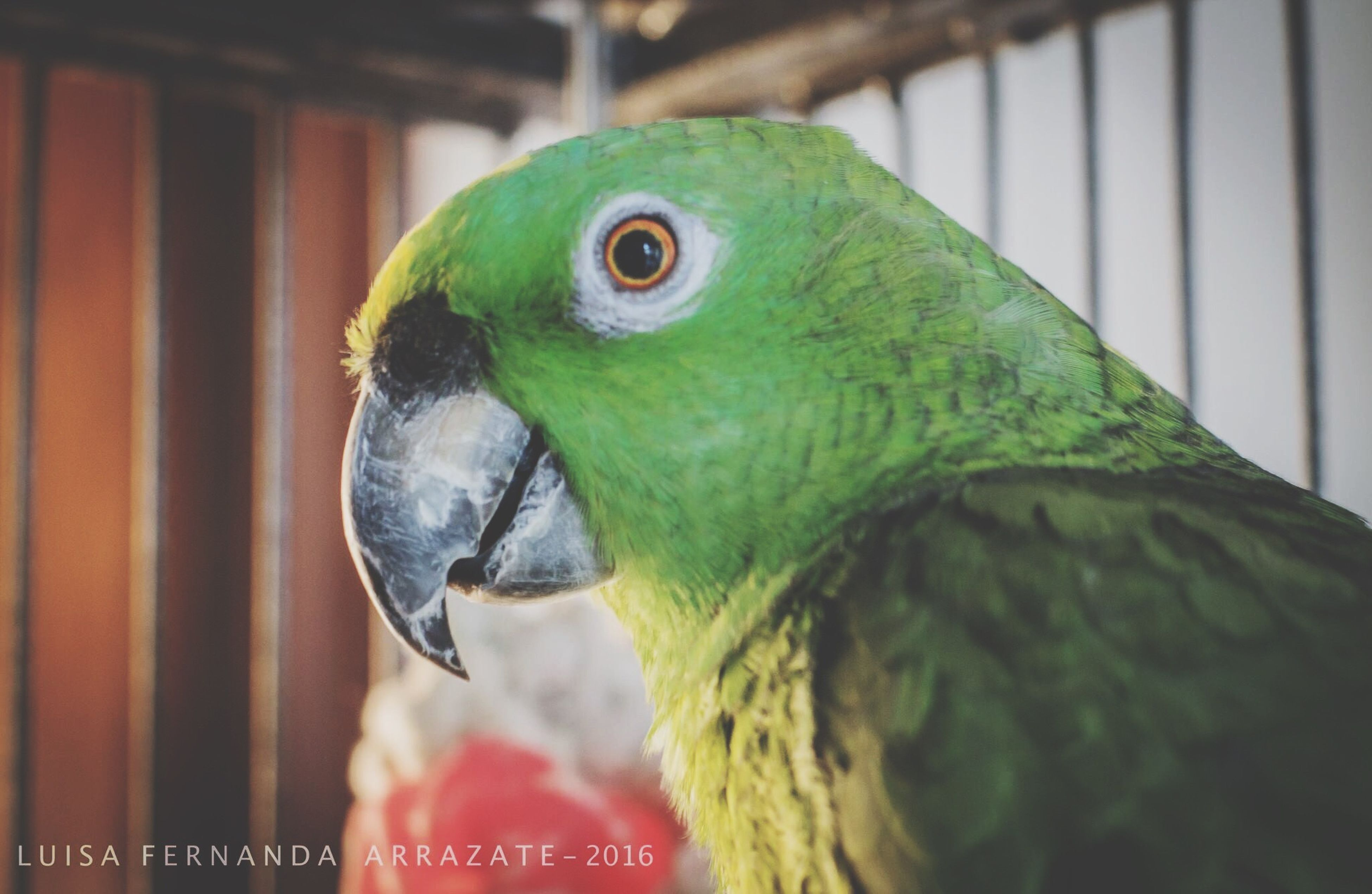 bird, one animal, wildlife, close-up, animals in the wild, beak, green color, parrot, focus on foreground, looking, nature, zoology, beauty in nature, green, avian, vibrant color, no people