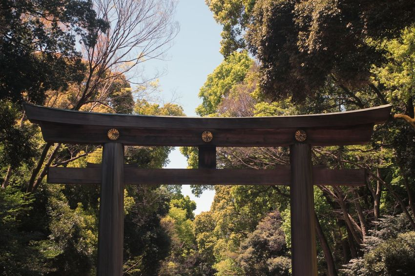 Tree Gate No People Outdoors Sunlight Day Sky Architecture Tokyo Travel Travel Destinations Traveling Vacations Beautiful Places Shrine Shrine Of Japan Japan Meiji Shrine