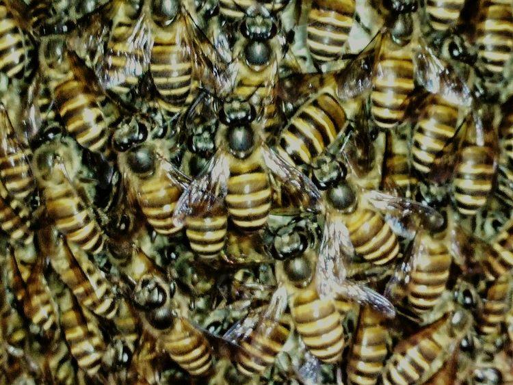 the colony Smartphonephotography OnePlusOne📱 Bees