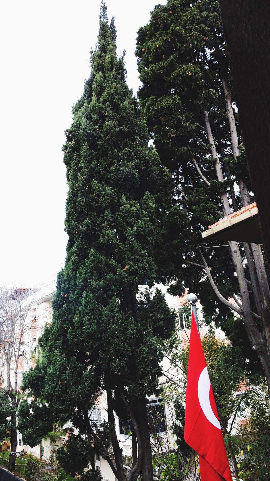 Tree Low Angle View Flag Patriotism Outdoors Growth Sky Day Nature No People