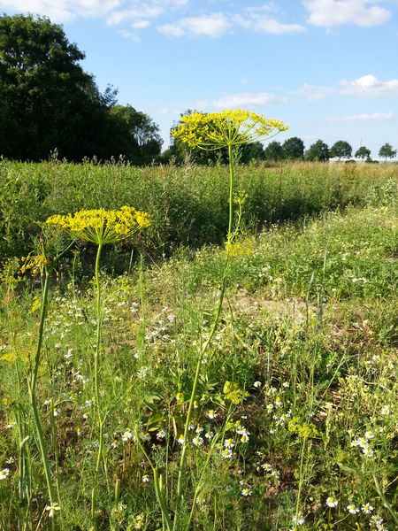 Weeds or beauty? Outdoors Beauty In Nature Csa Solawi No Glyphosate