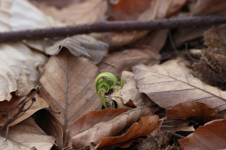 Alte Blätter Frühlingserwachen Neuer Trieb Neues Leben Waldspaziergang
