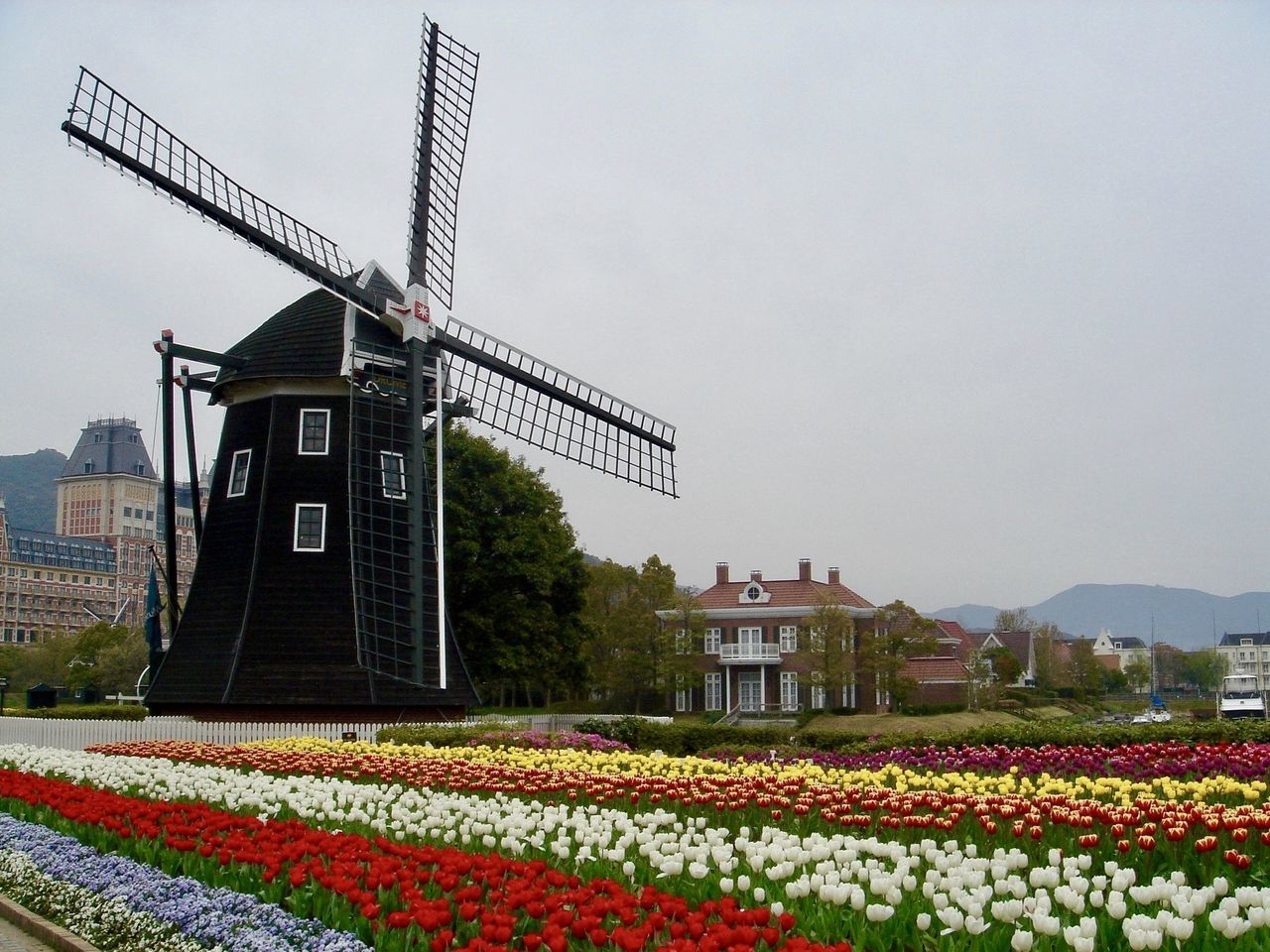 Memorial Photo of Dutch Windmill at Huis Ten Bosch in Japan Architecture Beauty In Nature Building Exterior Built Structure Day Dutch Countyside Dutch Landscape Dutch Village Flower Flower Field Flower Head Imitation Nature No People Outdoors Recreation  Sky Tulips Windmill