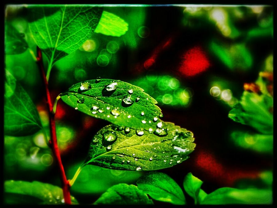 Colour Of Life Beauty In Nature Waterdrops After The Rain Stopped Green Plant