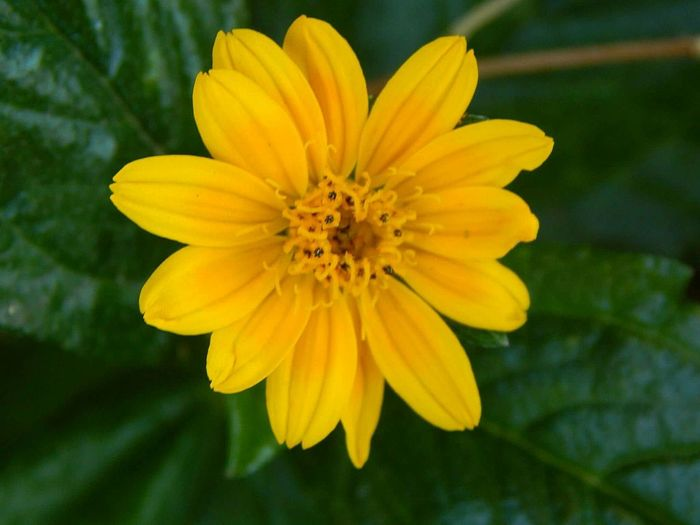 Una pequeña flor amarilla.