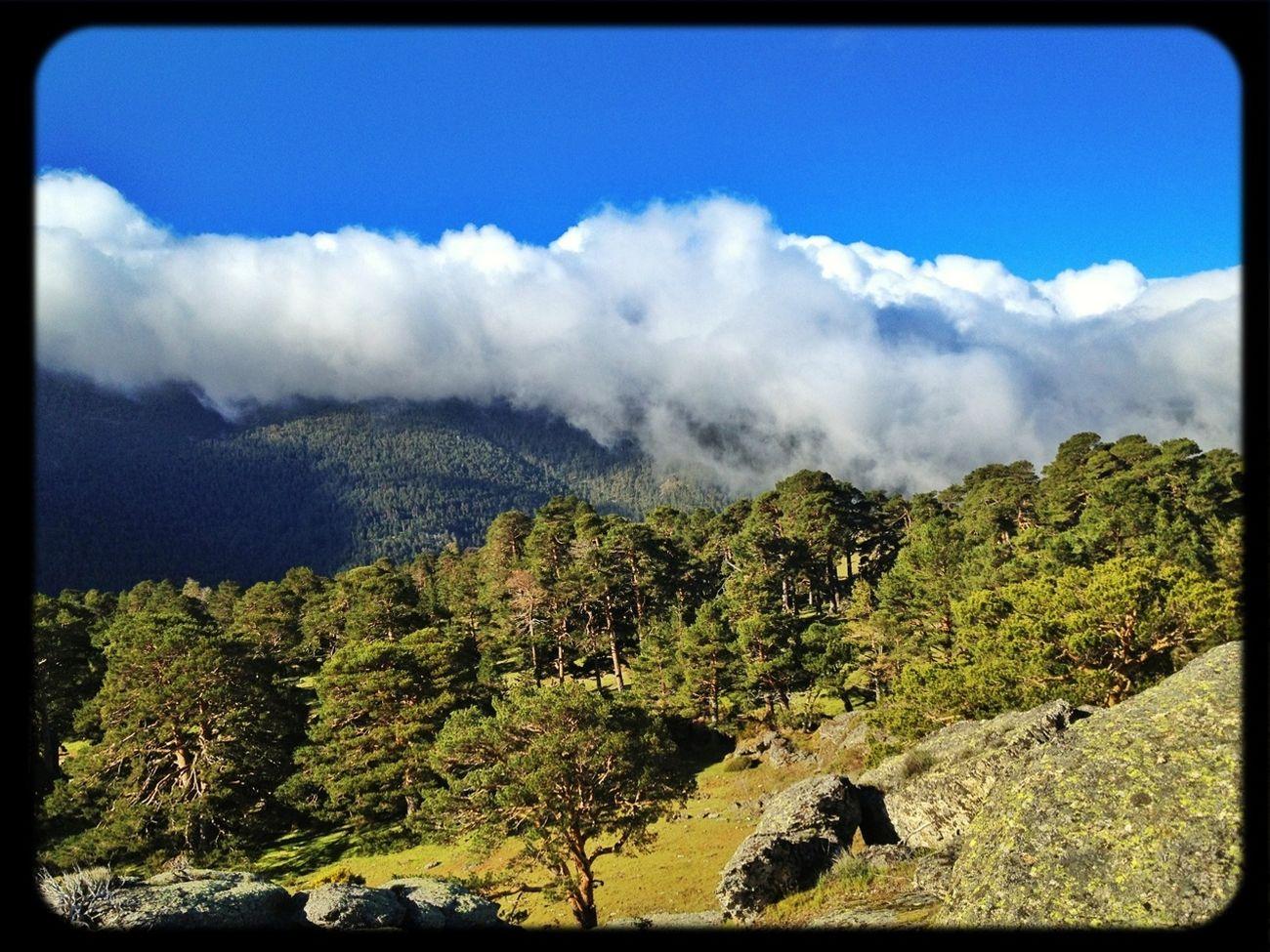 #trailrunning #CabezaMediana #valledelLozoya #training #gasss #dynafit #felineghost #mountain #ilovemountains #spring #primavera #beforework #SuuntoAmbitions #Dynafitfinde