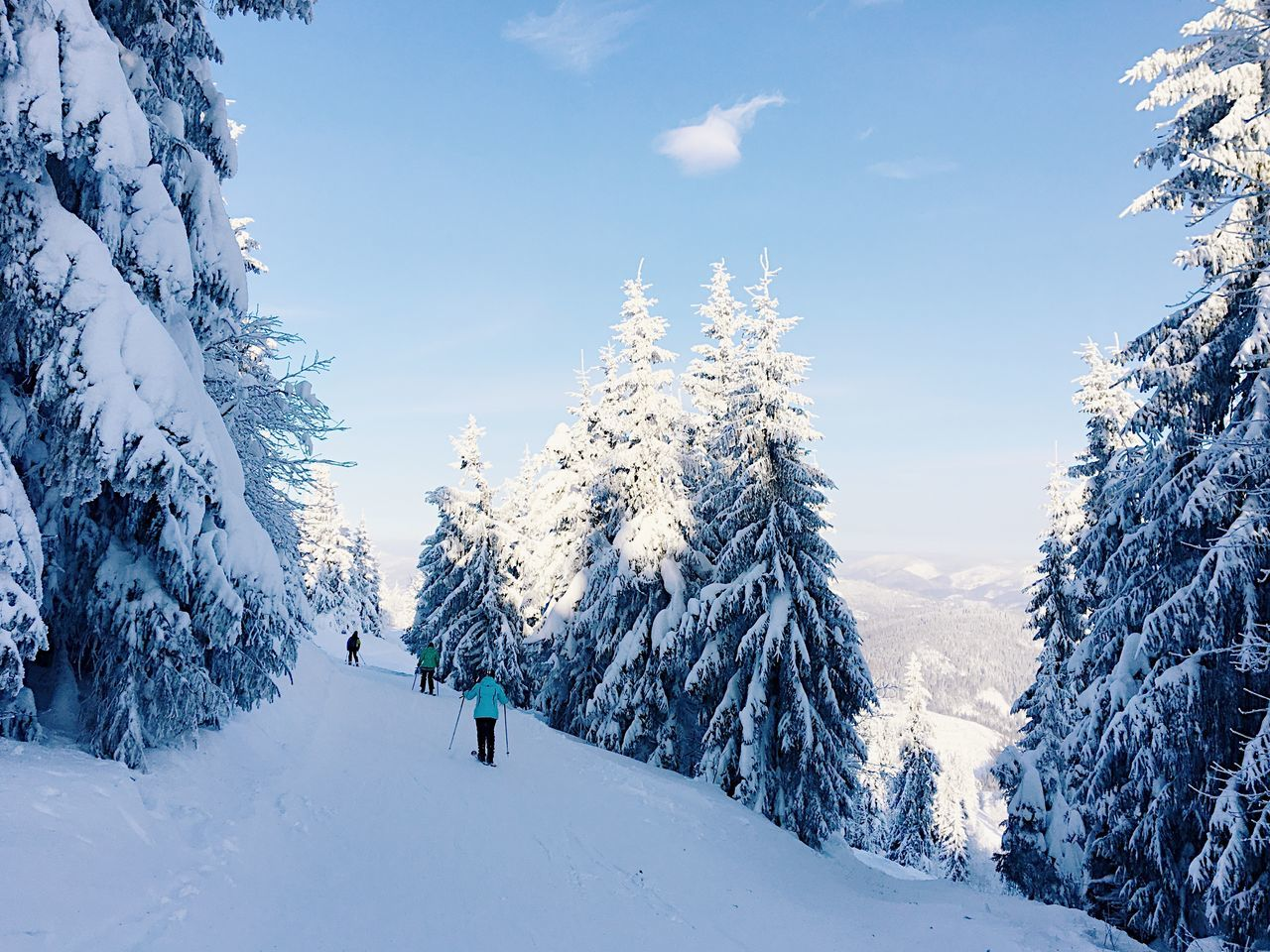 Beauty In Nature Cold Temperature Coniferous Tree Mountain Mountains Nature Pine Woodland Resort Ski Winter