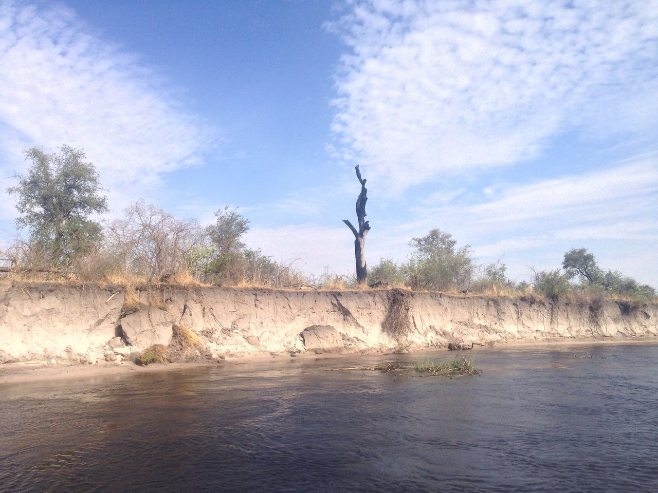 Tree at Kwando river, Caprivi Strip, Namibia Idyllic Landscape River Kwandoriver Caprivi Caprivistrip Namibia Africa Water Tree Dead Tree Nature Nature Photography