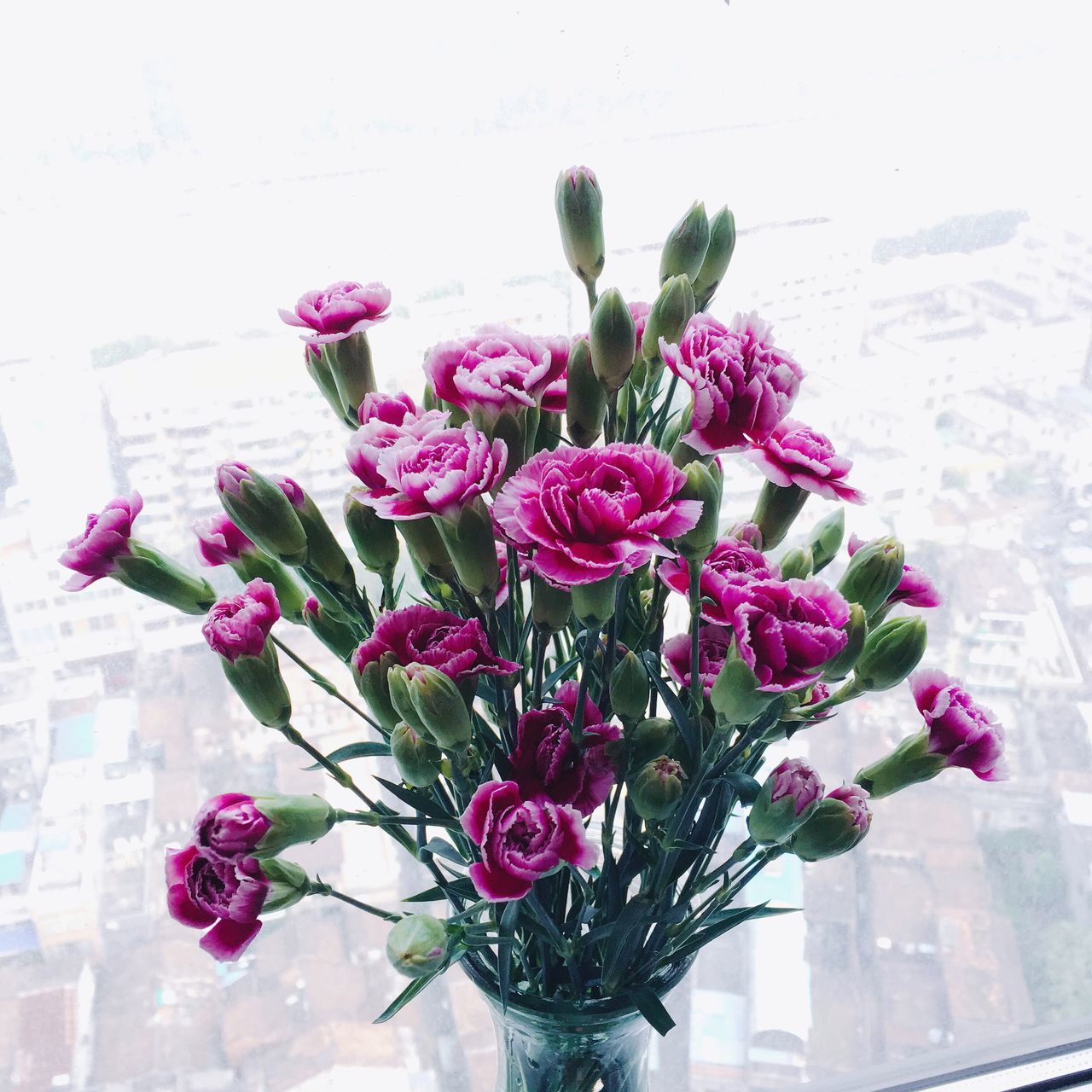 Flowerporn Carnation Fafa