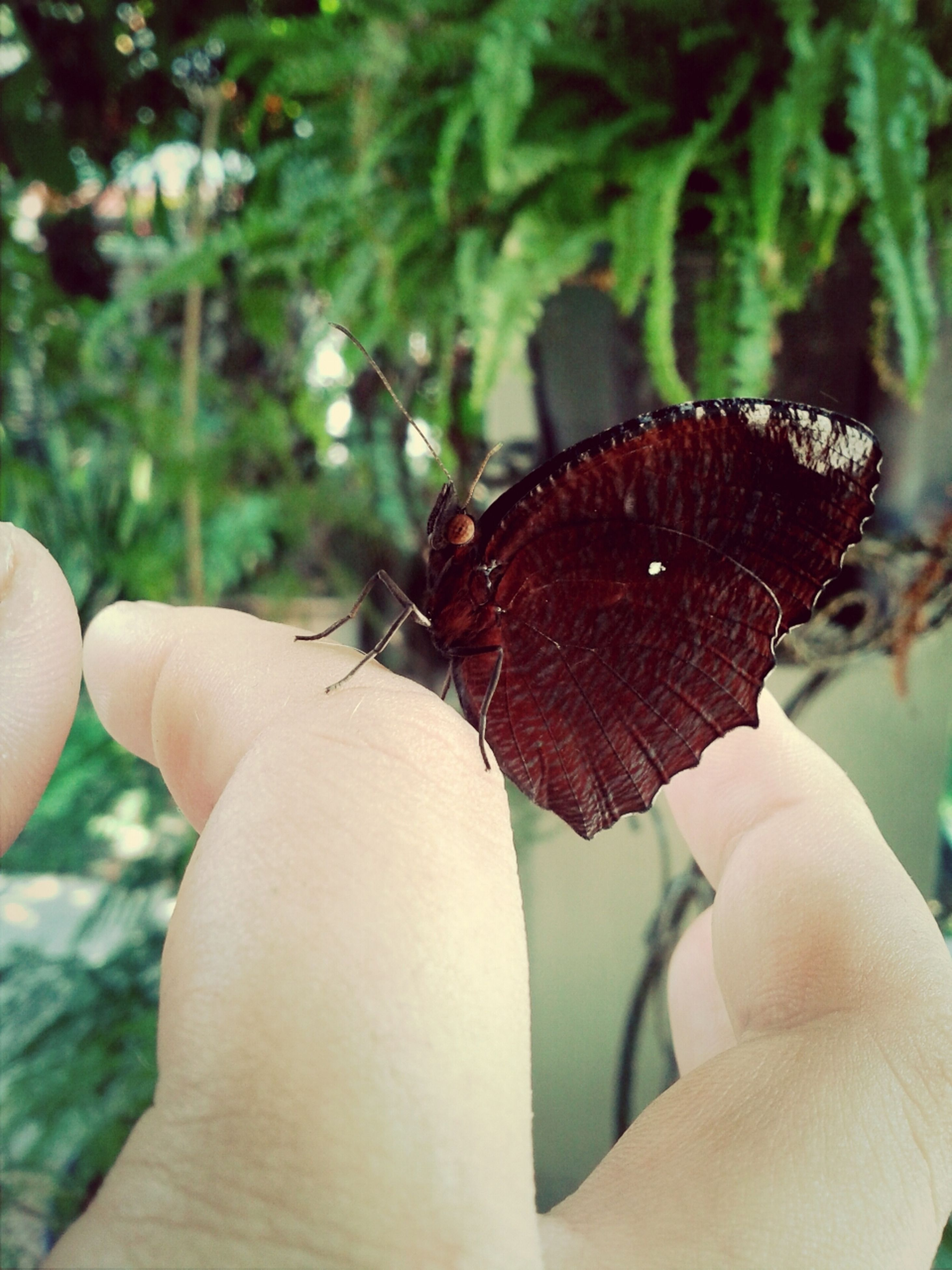 person, insect, holding, one animal, human finger, focus on foreground, part of, animal themes, close-up, cropped, unrecognizable person, animals in the wild, wildlife, butterfly - insect, personal perspective, butterfly, leisure activity