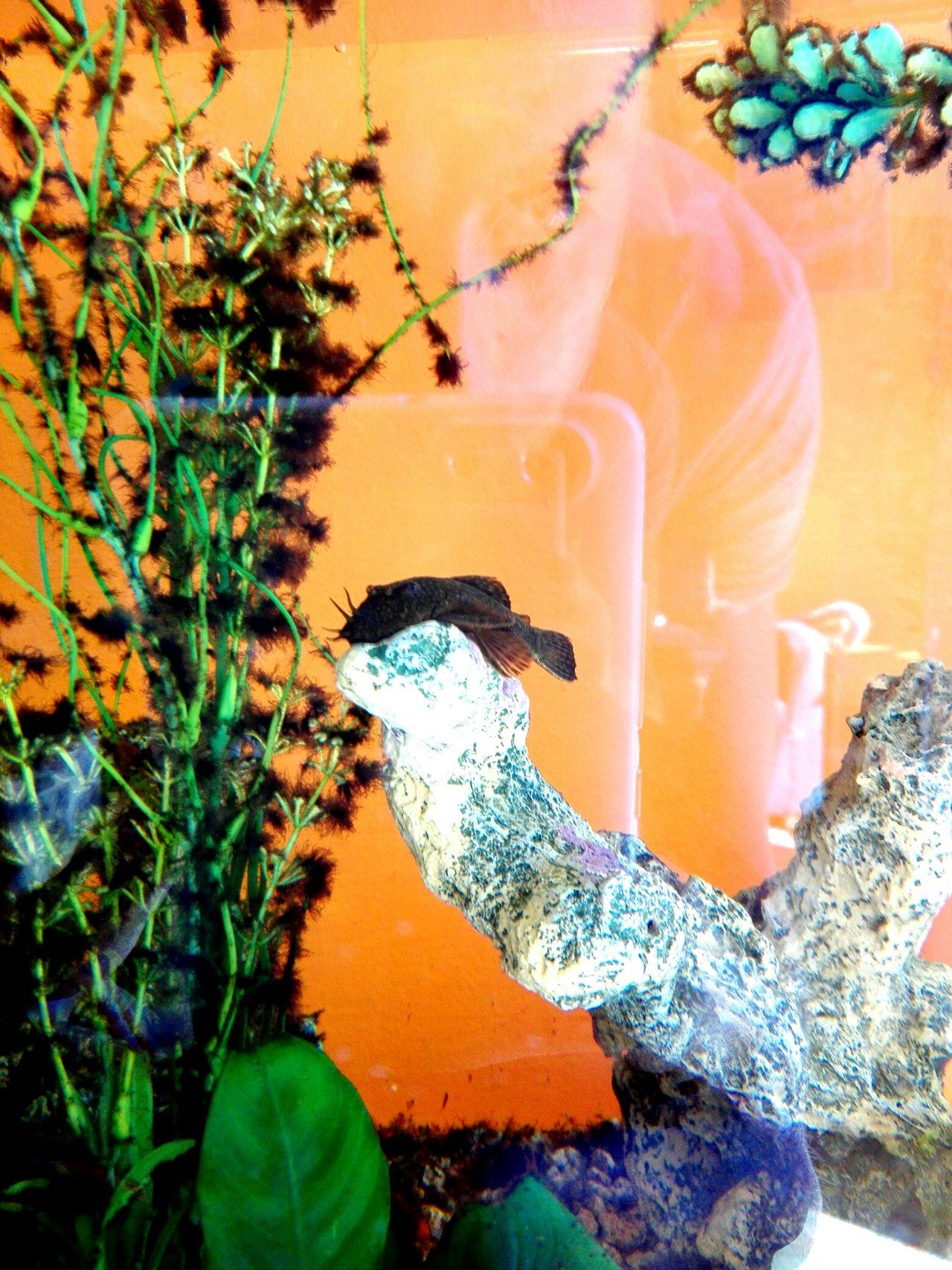 Nelmioacquario Pesce Pulitore Fish Relaxing