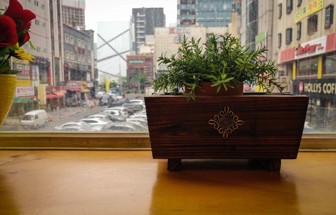 Built Structure Architecture City No People RainyDay Rainy Window Window Plant Herb Plantpot Yellow Cloudy Gloomy