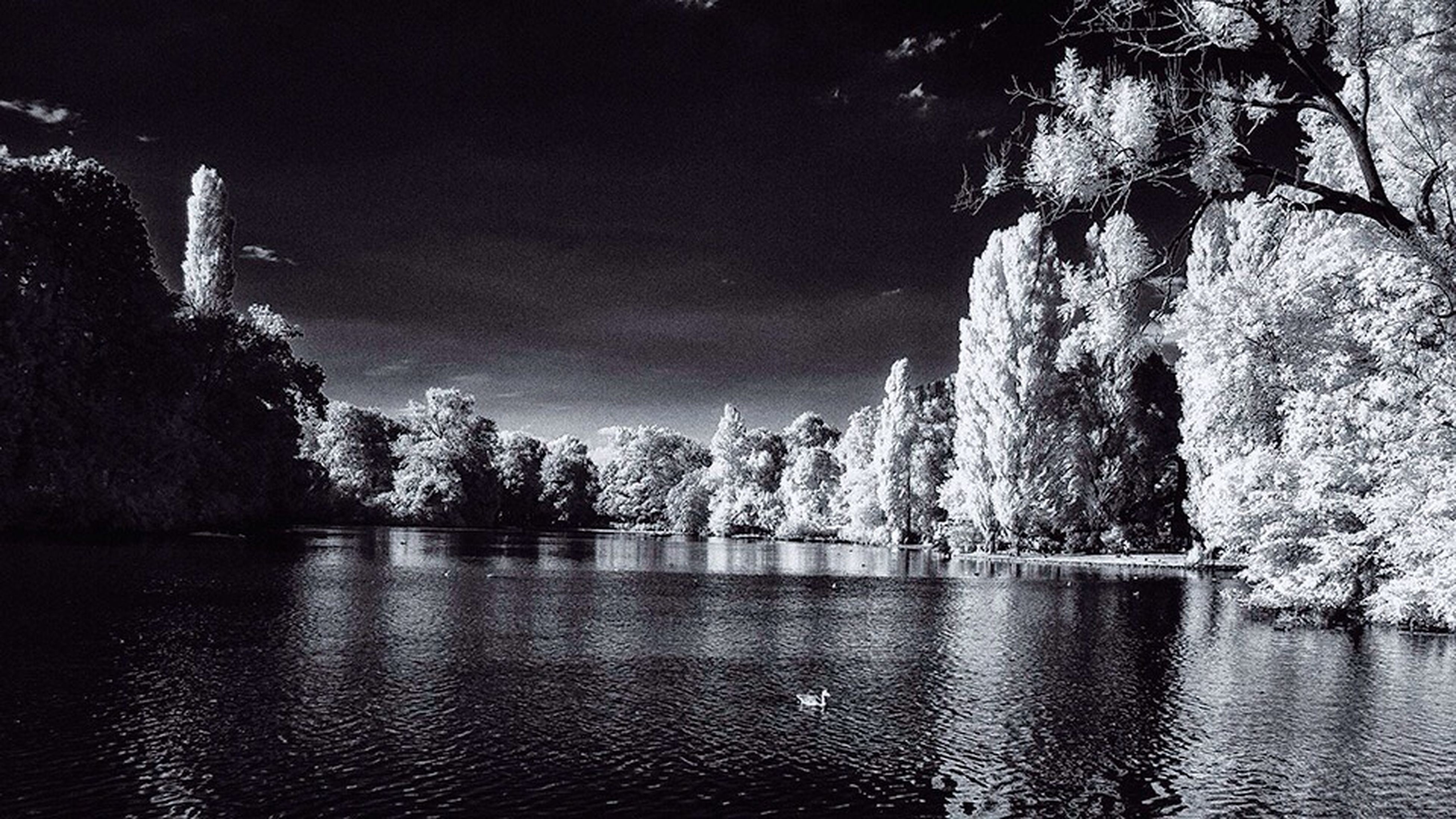 water, tree, nature, reflection, sky, no people, tranquility, growth, beauty in nature, outdoors, lake, scenics, night