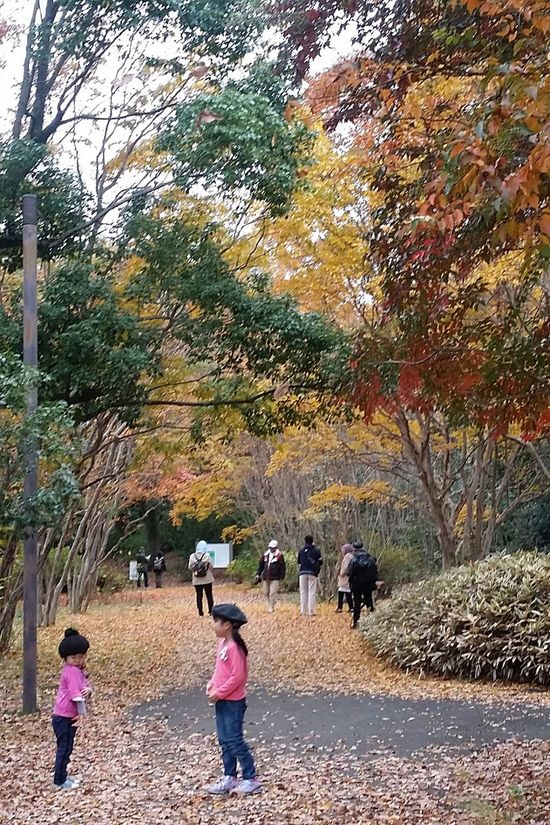 Kids Kids In Nature Kids In Autumn The Colours Of Autumn The Colours Of Nature Beauty In Nature Autumn Leaves Fall Leaves Japan Japannov2016 Autumn Flowers Showa Kinen Park