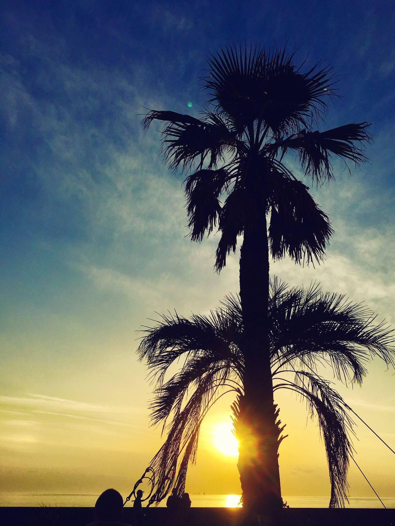 Palm Tree Tree Sky Scenics Sunset Silhouette Beauty In Nature Nature Beach Sea Outdoors Ocean View Chiba Tokyo Bay Japan