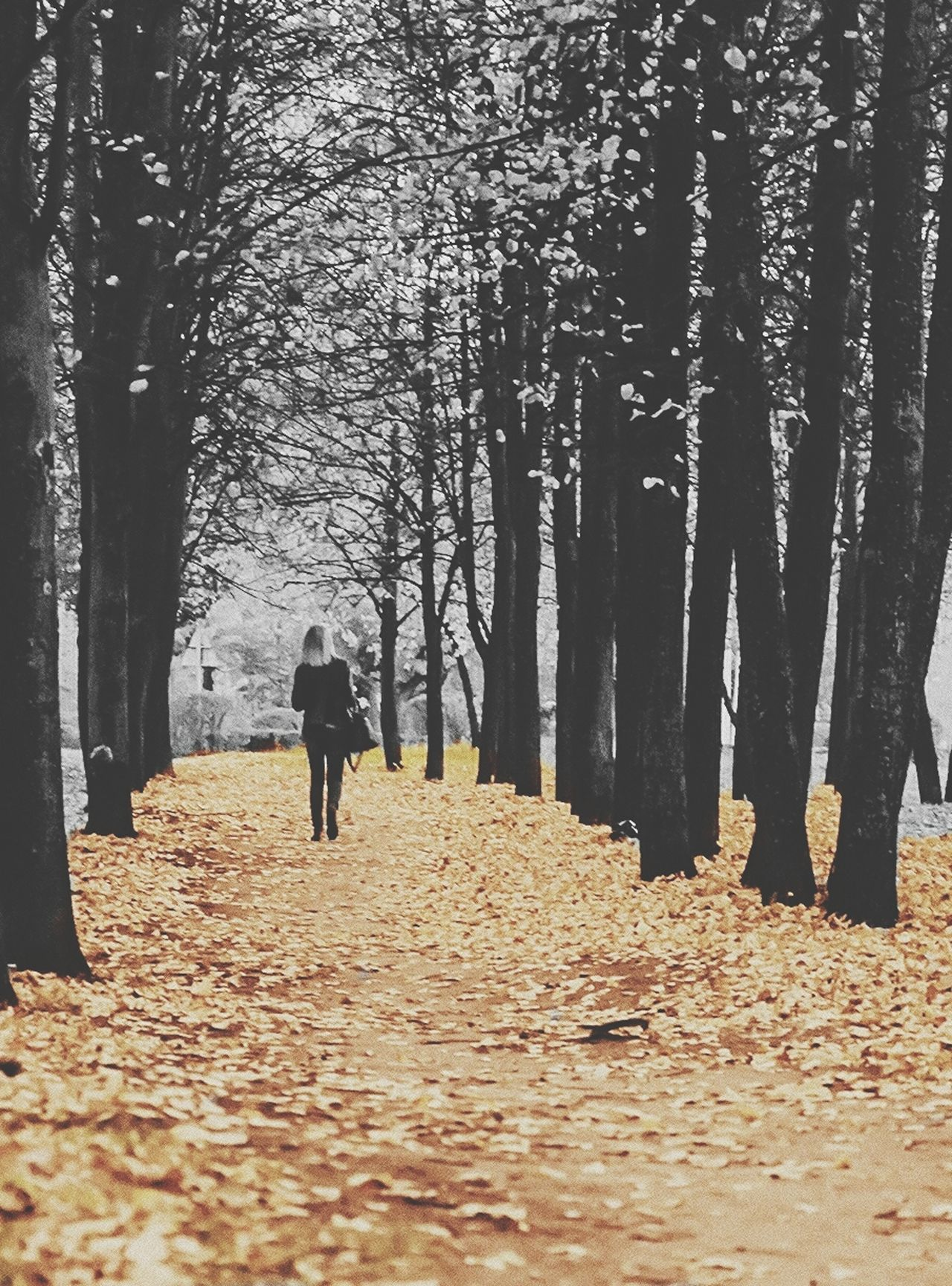 Beautiful stock photos of park, Autumn, Day, One Person, One Woman Only