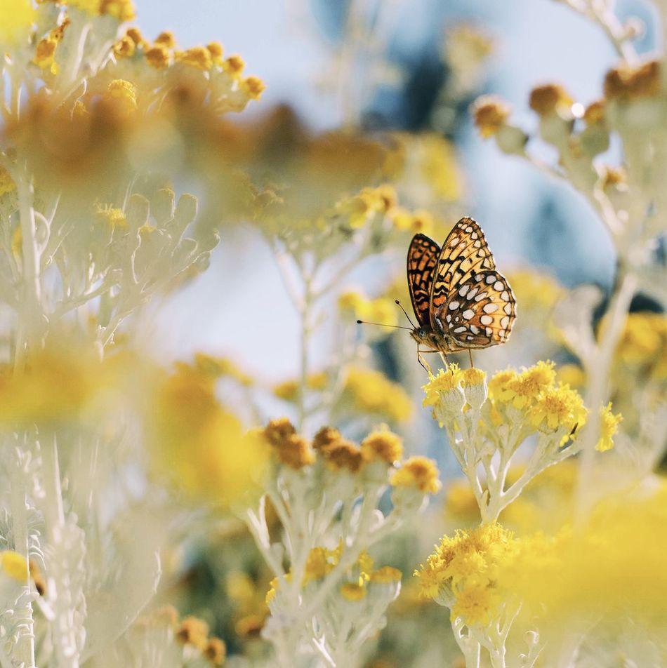 Beautiful stock photos of schmetterling, Animal Markings, Animal Themes, Animal Wildlife, Animals In The Wild