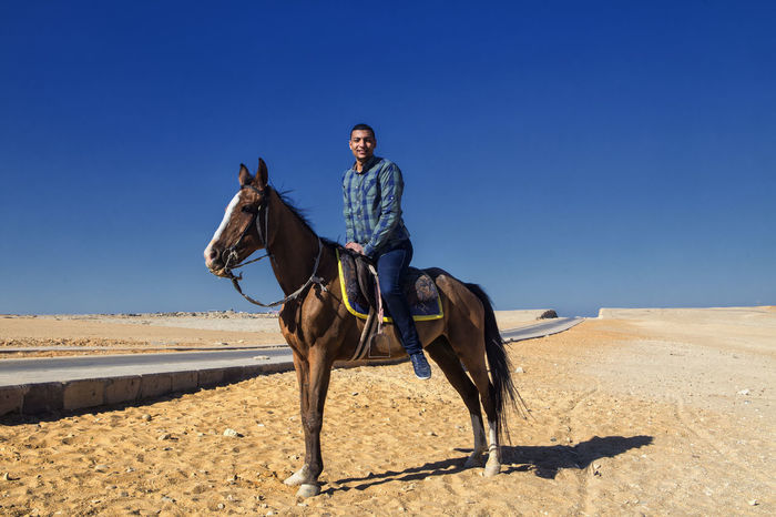 Animal Clear Sky Egyptian On A Horse Egyptian On Horse Full Length Giza Cairo Giza, Caïro, Egypt Giza,cairo,egype Horse Horseback Riding Jockey Man On Horse Man On Horseback One Animal One Person Riding Saddle