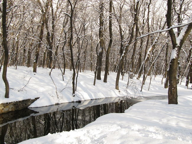 Cold Temperature Frozen River In The Forest Snow Snow Day Snowy Winter Wintertime Snowy Forest
