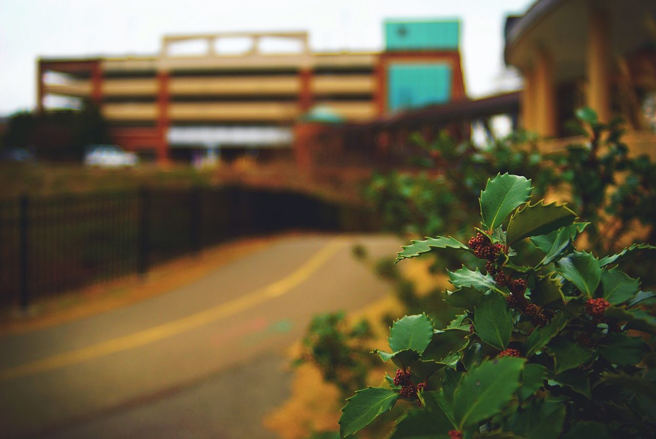 Random plant along a walkway in Roanoke, Virginia Built Structure Nature City Plant Architecture No People Outdoors Flower Growth Day Beauty In Nature Close-up EyeEm Best Shots EyeEm Nature Lover Eye4photography  EyeEm Gallery EyeEmBestPics Green Red Focus On Foreground Walkway Virginia Brick Wall Beautiful Pretty
