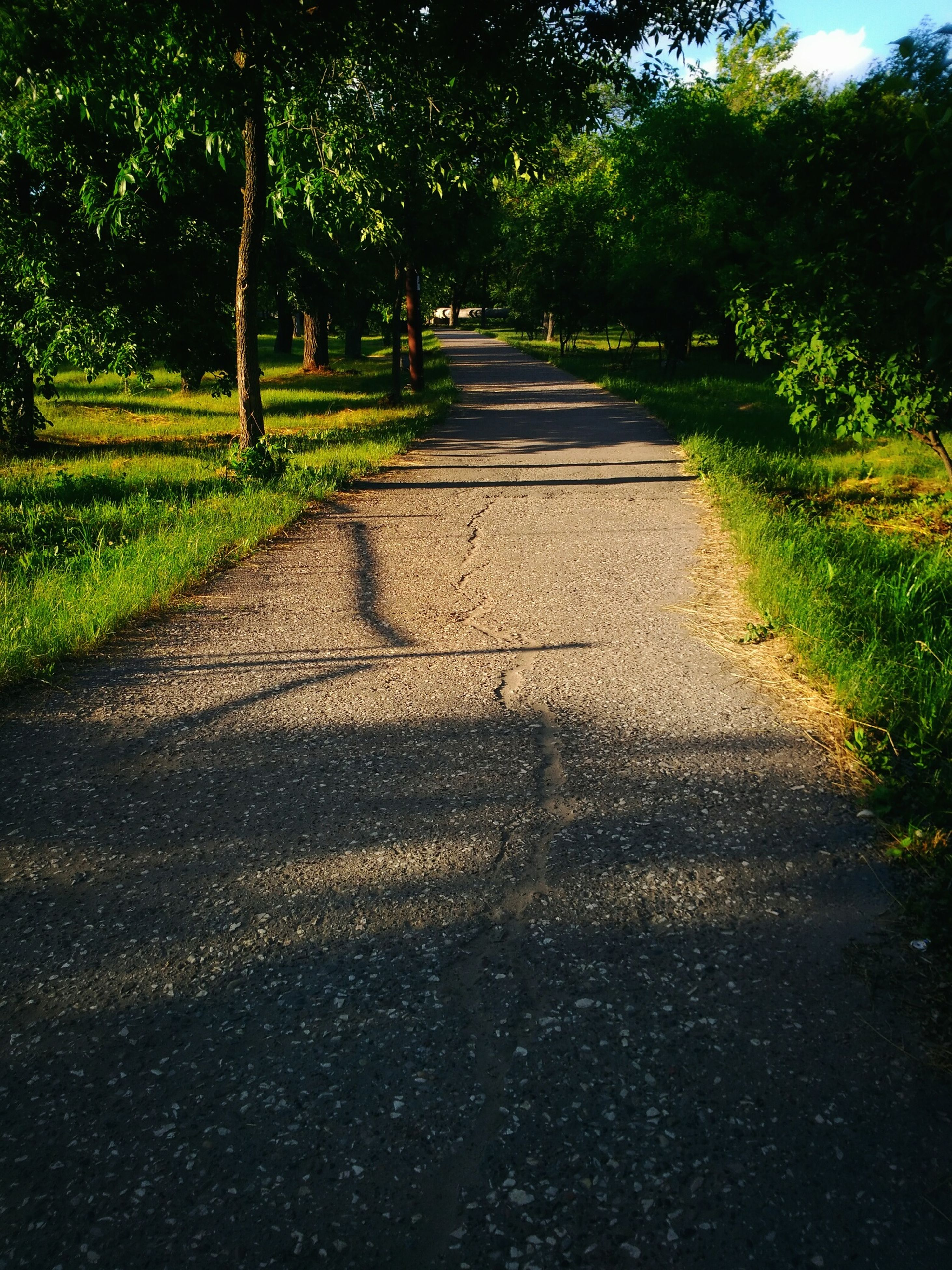 tree, shadow, the way forward, nature, road, sunlight, growth, outdoors, tranquility, no people, day, tranquil scene, beauty in nature, grass