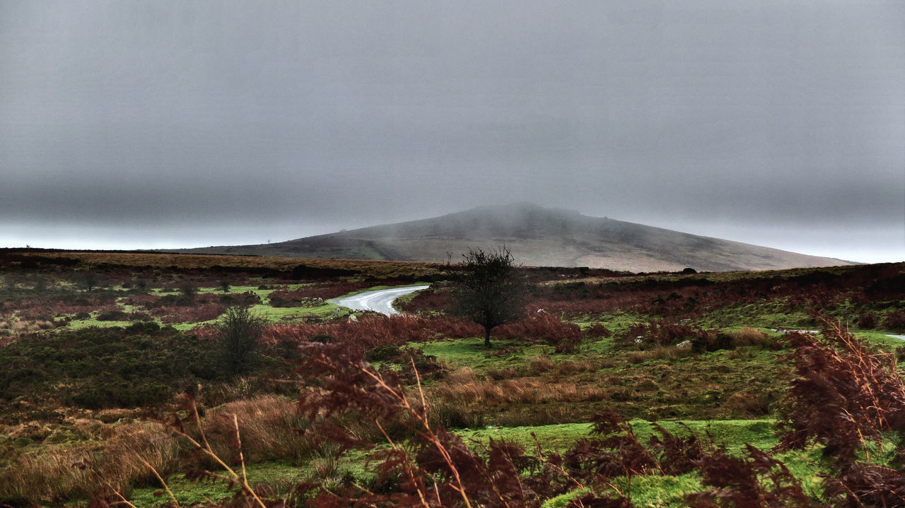 Tor Hound, Dartmoor Landscape in the Mist Beauty In Nature Day Dramatic Weathered Landscape Muted Colours Colors Wet Rain Storm Fog Mist Misty Dartmoor Tor Hound Ferns Bracken Grasses Photography Taking Photos Documentary Reportage Cloud Bank Fog Geology Landscape Motion Nature Non-urban Scene Outdoors Physical Geography Power In Nature Remote Scenics Smoke Steam Tranquil Scene Tranquility