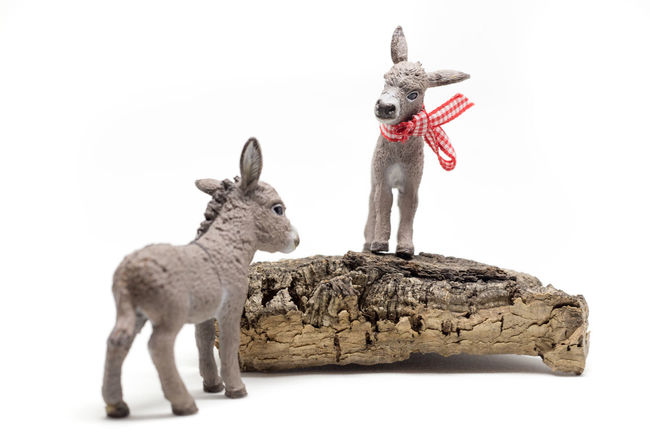 Adore Animal Animals Bestfriend Cute Donkey Donkeys Farm Farm Animals Friends Friendship Kids Kids Playing Look Up Lookingup Playing With The Animals Princess Small Toy Toyphotography Toys White Background