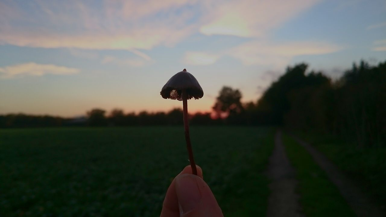 Mushrooms 🍄🍄 Mushrooms Magic. Sunsets Sky Adventure Beauty In Nature Outdoors No People Foraged Nature