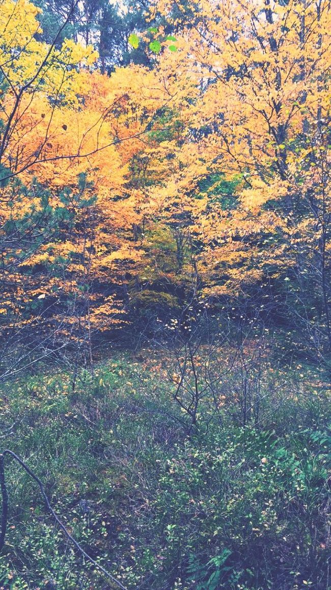 Nature Growth Beauty In Nature Scenics Tree Outdoors Tranquility Plant Day No People Tranquil Scene Grass Close-up Leaf 🍂 Autumn🍁🍁🍁 Leaf Autumn Colors Autumn Leaves Autumn Fall Beauty In Nature Nature Growth
