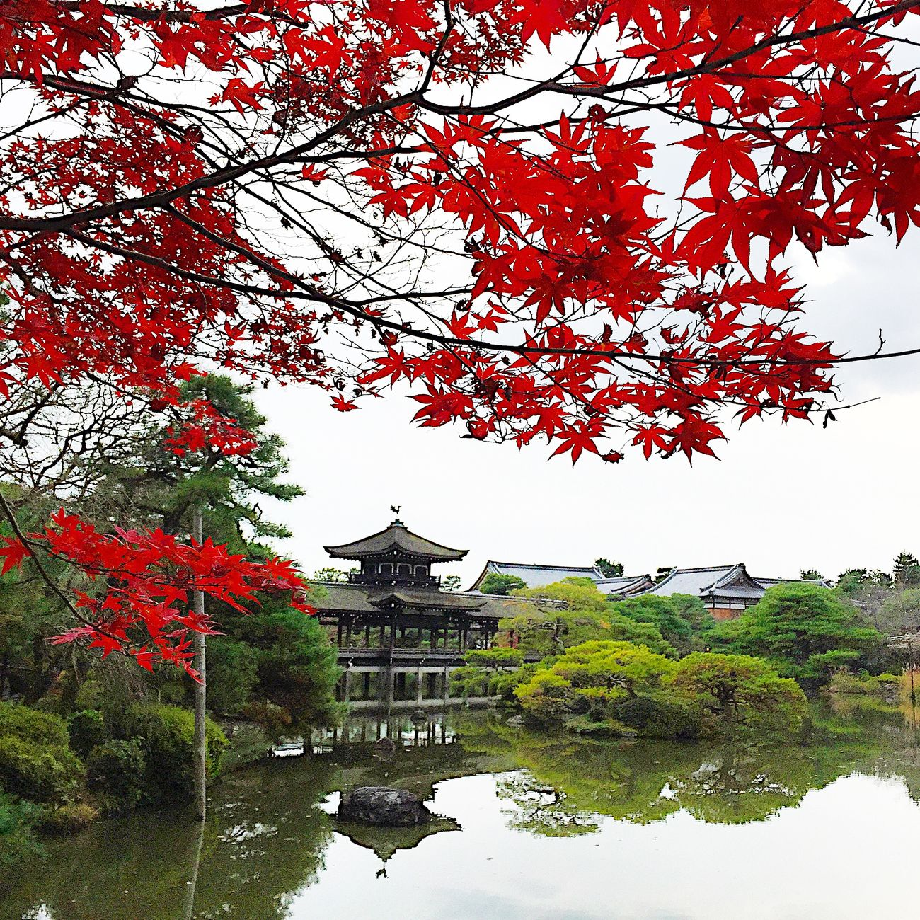 京都 平安神宮 神苑 紅葉 もみじ