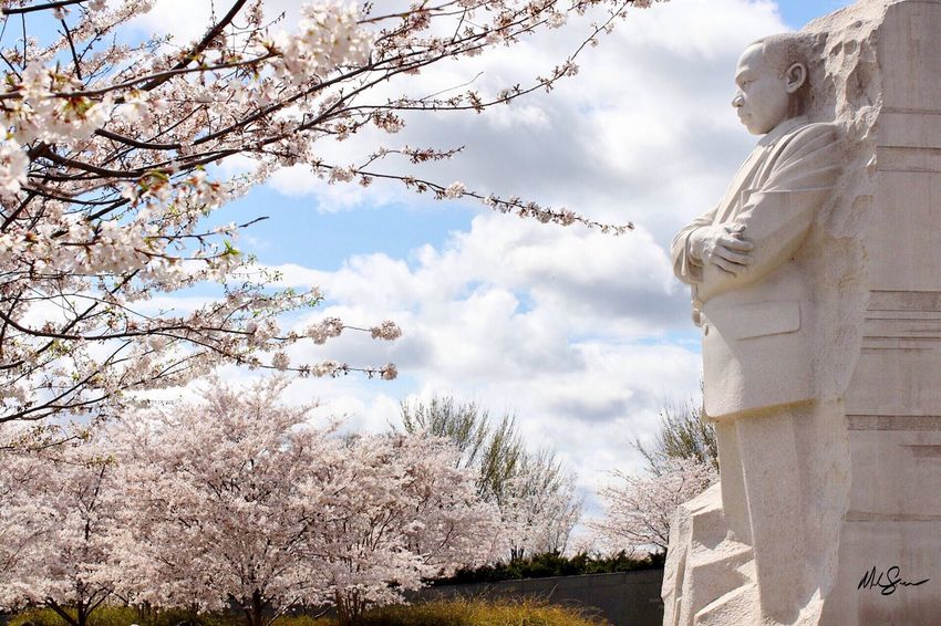 MLK Mlkday MLK Memorial Washington DC Human Representation Low Angle View Art And Craft Statue Sky Sculpture Tree Religion Day Cloud - Sky Spirituality Outdoors Architecture