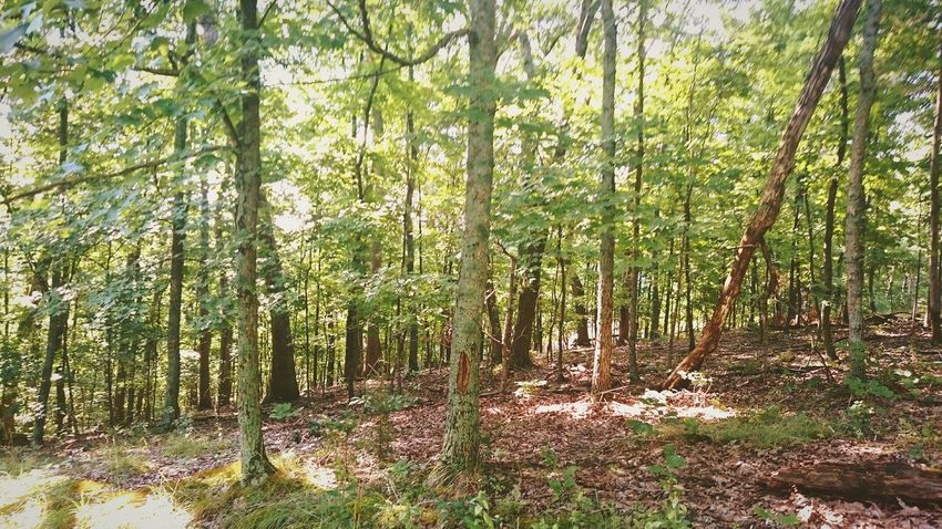 A view from our holiday lodge Forest Holiday Green St Louis Missouri