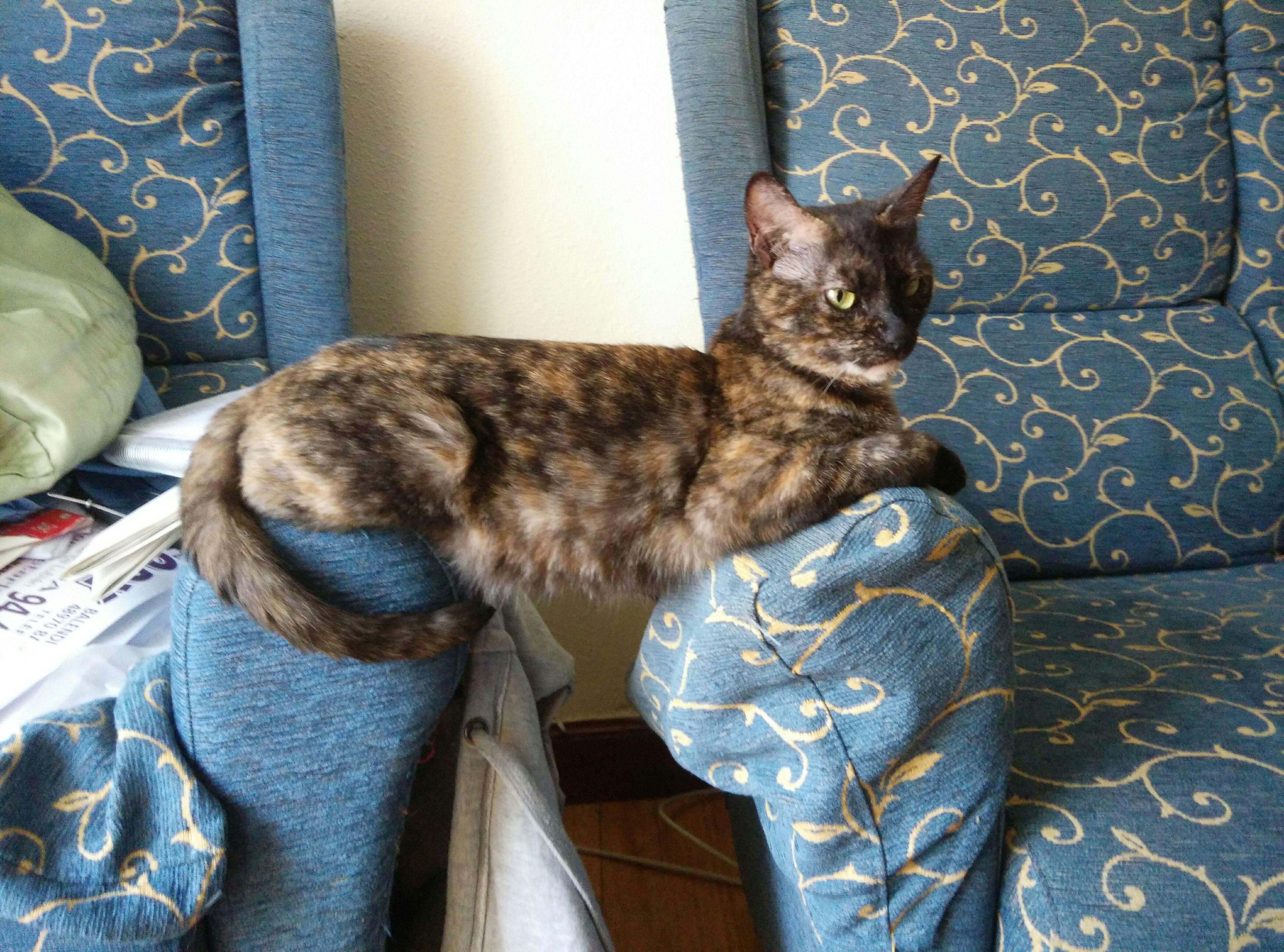 Sleepy Cat FUNNY ANIMALS Funny Cat Little Cat Sweet Dreams Neko Hello World Sinka My Cat Lovely Cat