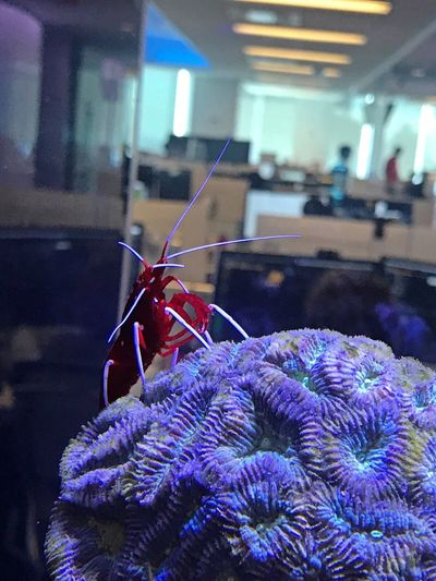 Indoors  Focus On Foreground Close-up No People Day Animal Themes Shrimps Sea Life Fish Aqauarium Underwater Bloomberg Building