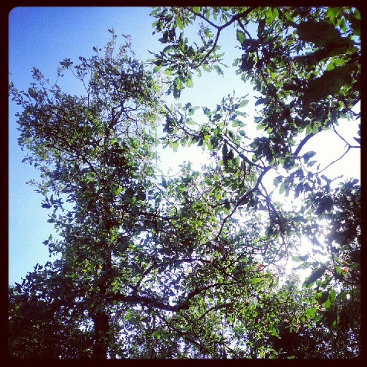 tree, nature, growth, low angle view, branch, no people, day, beauty in nature, forest, clear sky, outdoors, sunshine, blue sky, sky