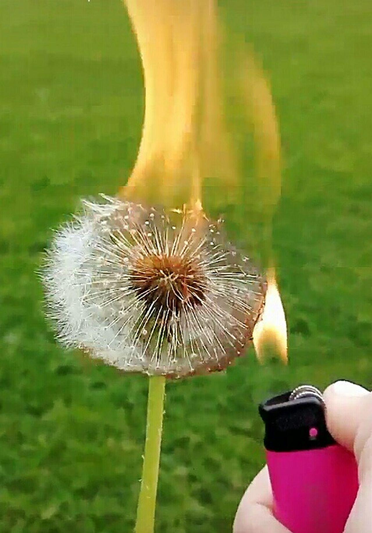 Fire Flower Human Finger Human Body Part One Person Burning Burning Flower Burning Plant