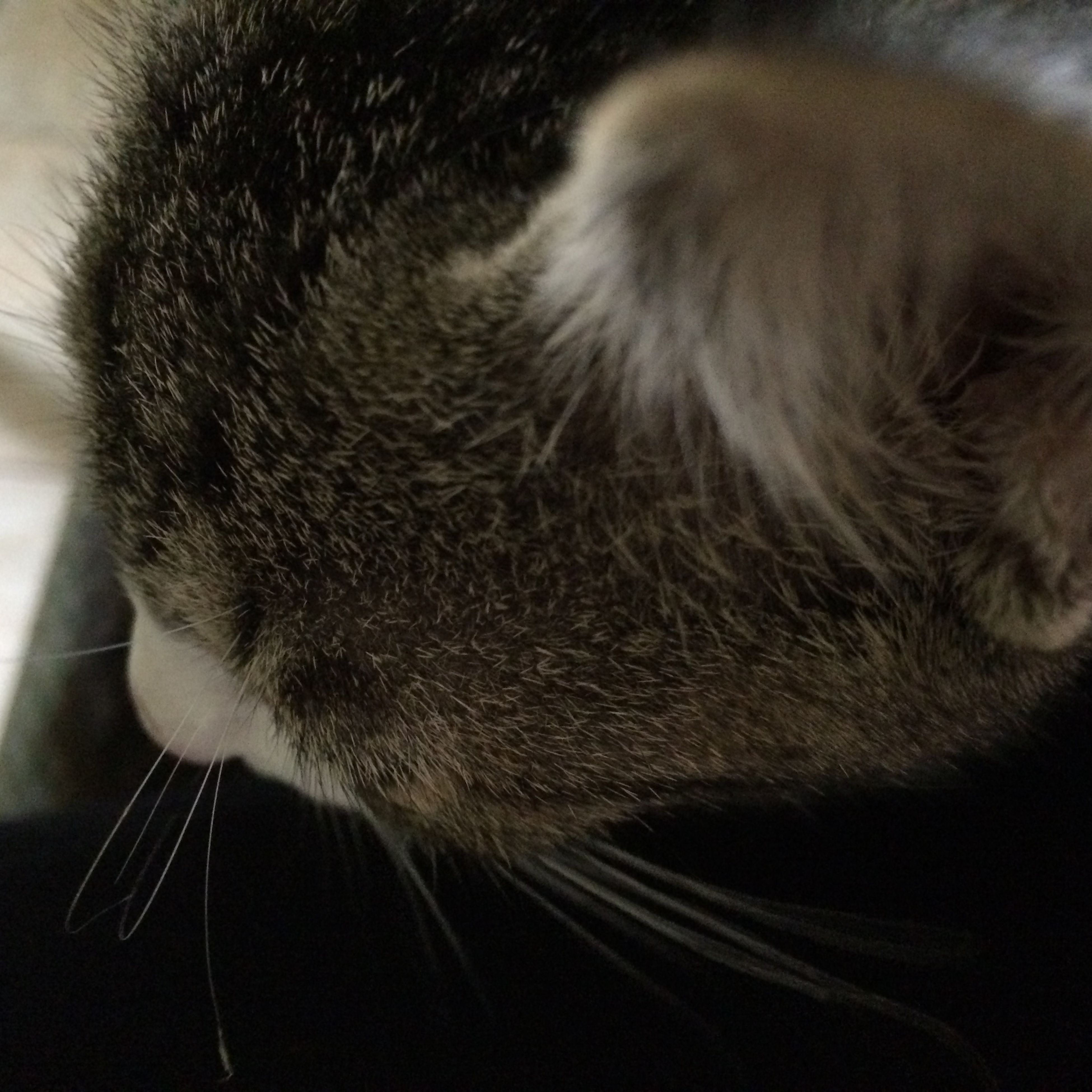 Cat♡ Milky Nose Morning MyPhotography IPhoneography Little Kitten