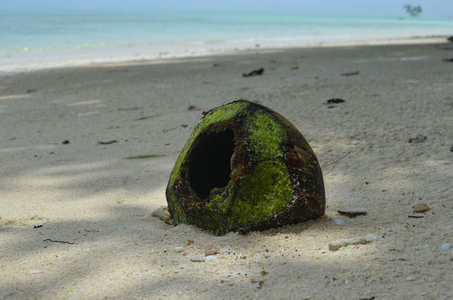 Andaman And Nicobar Islands Andaman Sea Andamanislands Beach Coconut Havelockisland India Indien Kokosnuss No People Sand STAND