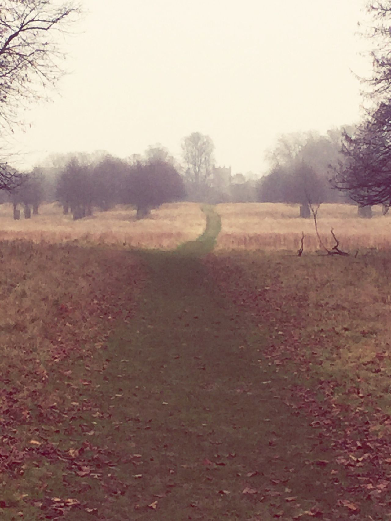 Bushey Park Kingston Upon Thames Winter Beauty In Nature Nature Church British Winter